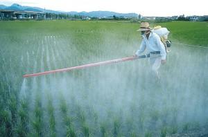Mencegah Keracuanan Pestisida